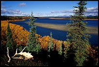 Antlers and bend of the Kobuk River, mid-morning. Kobuk Valley National Park, Alaska, USA.