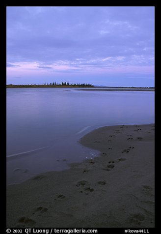 Caribou tracks on  shore of Kobuk River, evening. Kobuk Valley National Park (color)