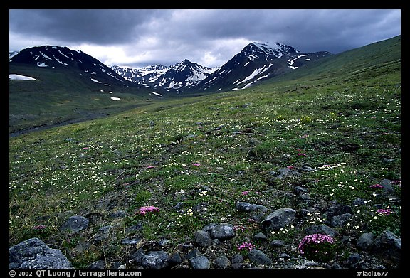Green valley with alpine wildflowers and snow-clad peaks. Lake Clark National Park (color)