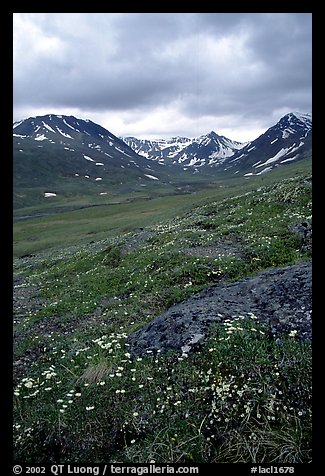 Valley with wildflowers, between Turquoise Lake and Twin Lakes. Lake Clark National Park, Alaska, USA.