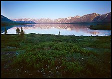 Tundra in summer with wildflowers and Twin Lake shore. Lake Clark National Park, Alaska, USA.
