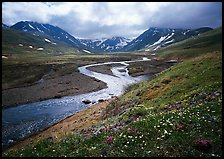 Valley with wildflowers, between Turquoise Lake and Twin Lakes. Lake Clark National Park ( color)