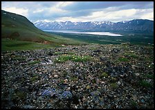 Tundra with blue forget-me-nots and Twin Lakes. Lake Clark National Park, Alaska, USA.