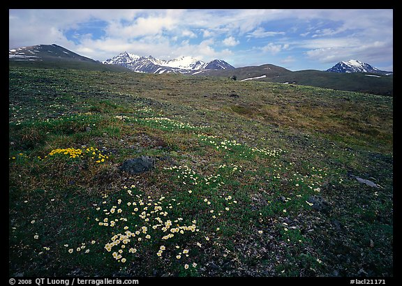 Green tundra slopes with alpine wildflowers and mountains. Lake Clark National Park (color)