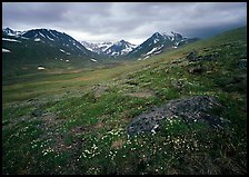 Wildflowers, valley and mountains. Lake Clark National Park, Alaska, USA.
