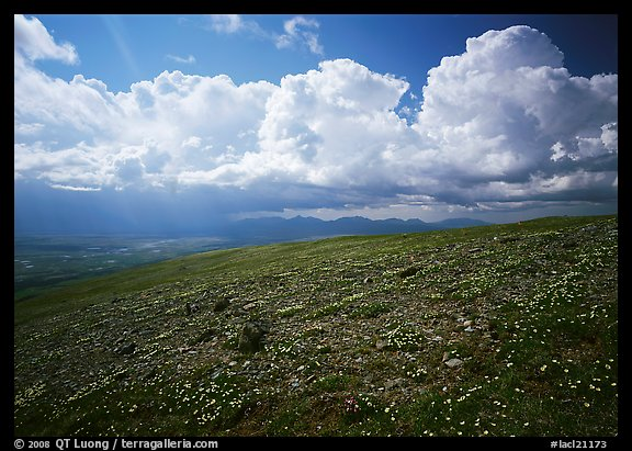 Tundra, wildflowers, and puffy white storm clouds. Lake Clark National Park (color)