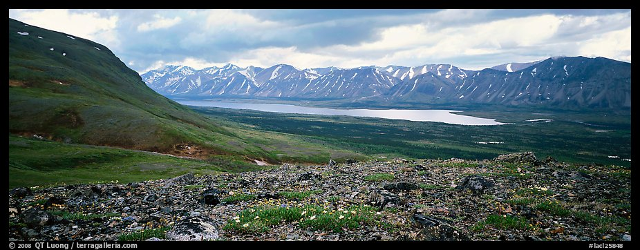 Tundra flowers with distant lake and mountains. Lake Clark National Park (color)