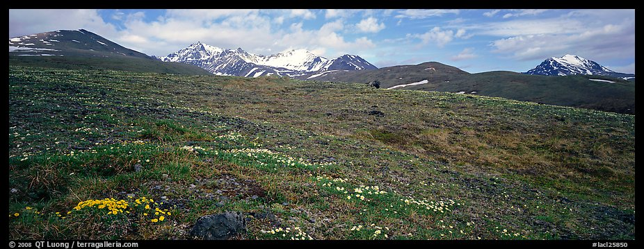 Wildflowers, tundra, and mountains. Lake Clark National Park (color)