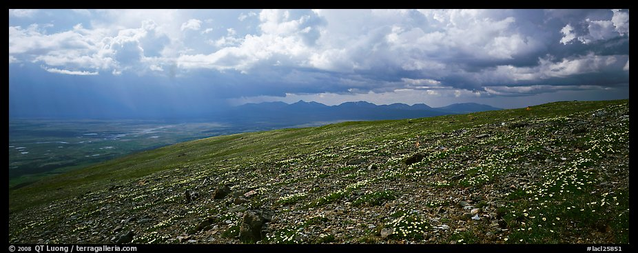 Tundra wildflowers under storm clouds. Lake Clark National Park (color)