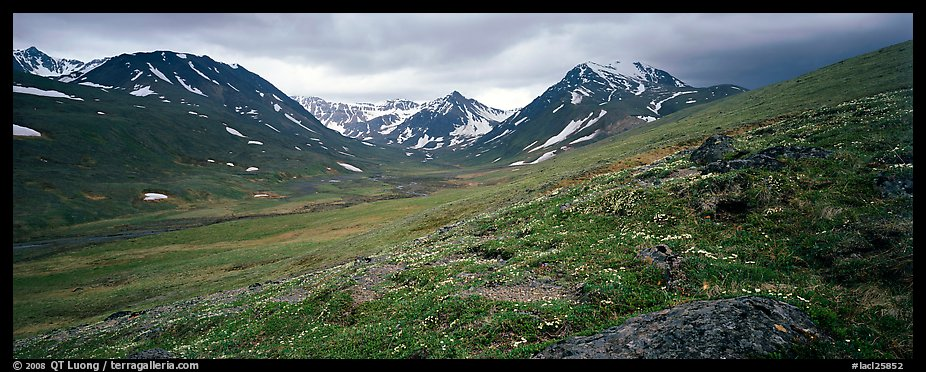 Summer mountain landscape with green tundra and wildflowers. Lake Clark National Park (color)