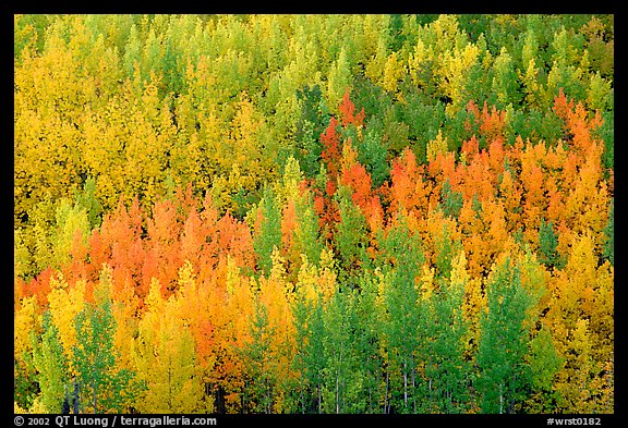 Autunm colors near Chokosna. Wrangell-St Elias National Park, Alaska, USA.
