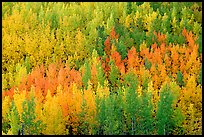 Autunm colors near Chokosna. Wrangell-St Elias National Park, Alaska, USA. (color)