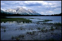 Bonaza ridge seen above a pond at the base of Mt Donoho, afternoon. Wrangell-St Elias National Park, Alaska, USA.