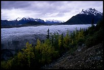 Fall colors, Mt Donoho above Root glacier. Wrangell-St Elias National Park, Alaska, USA.