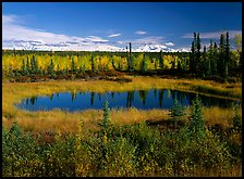 Pond and Wrangell range in the distance. Wrangell-St Elias National Park, Alaska, USA.
