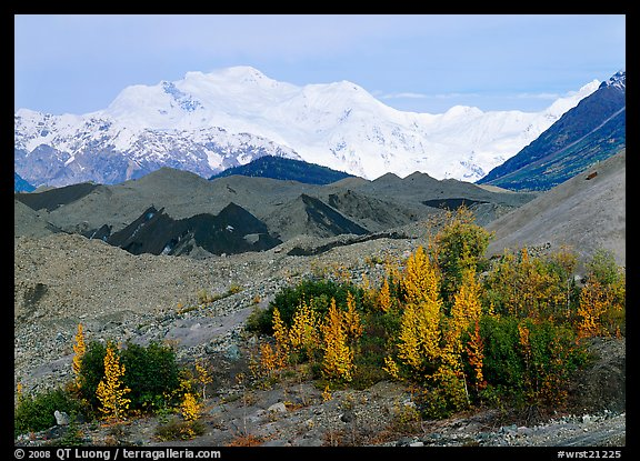 Trees in fall colors, moraines, and Mt Blackburn. Wrangell-St Elias National Park, Alaska, USA.