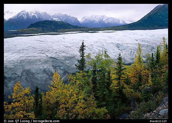 Trees, Root Glacier, and Wrangell Mountains. Wrangell-St Elias National Park (color)