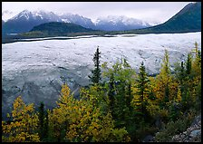 Trees, Root Glacier, and Wrangell Mountains. Wrangell-St Elias National Park, Alaska, USA.