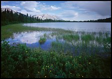 Wildflowers, reeds, and lake at the base of Mt Donoho. Wrangell-St Elias National Park, Alaska, USA.