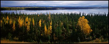 Autumn scenery with forest, lake, and distant mountains. Wrangell-St Elias National Park (Panoramic color)