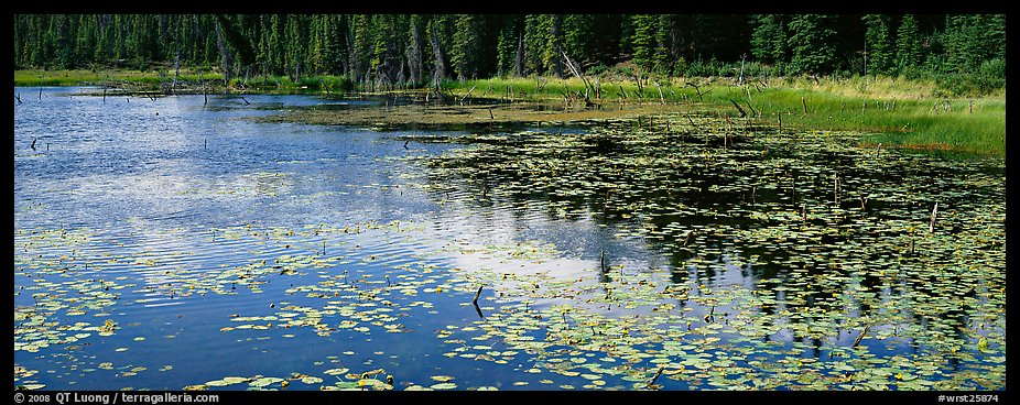 Pond with aquatic plants and reflections. Wrangell-St Elias National Park (color)