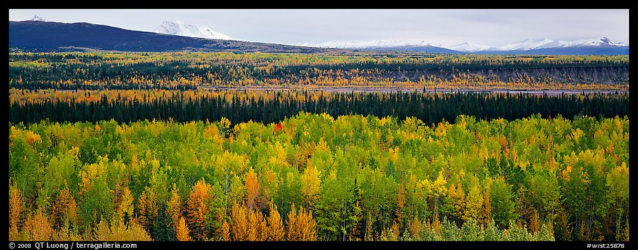 Valley with aspen trees in autumn. Wrangell-St Elias National Park (color)