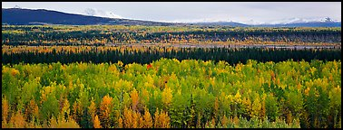 Valley with aspen trees in autumn. Wrangell-St Elias National Park, Alaska, USA.