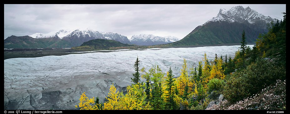Mountain landscape with trees in fall color and glacier. Wrangell-St Elias National Park (color)
