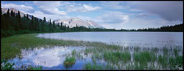Reeds, pond, and mountains with open horizon. Wrangell-St Elias National Park, Alaska, USA.