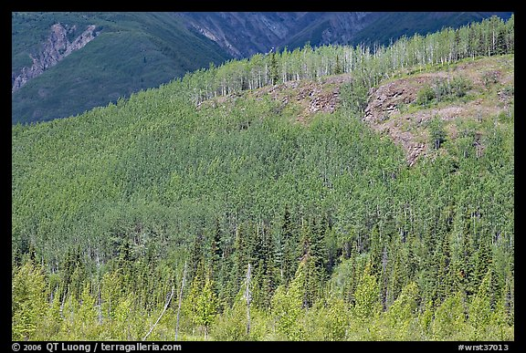 Forested hill. Wrangell-St Elias National Park (color)