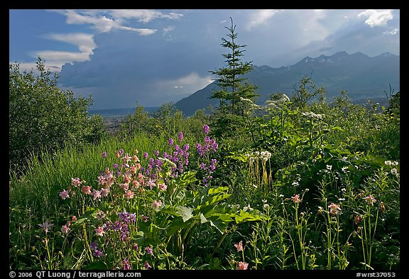 Wildflowers and mountains near Kennicott. Wrangell-St Elias National Park (color)