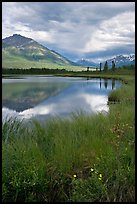 Flowers, grasses, lake, and mountains. Wrangell-St Elias National Park, Alaska, USA.