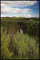 Aspen, Kuskulana canyon and bridge. Wrangell-St Elias National Park, Alaska, USA.
