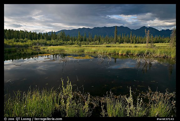 Pond and swamp with dark water. Wrangell-St Elias National Park (color)