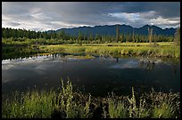 Pond and swamp with dark water. Wrangell-St Elias National Park, Alaska, USA.