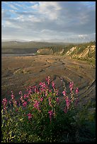 Fireweed, Kotsina river plain, and bluffs. Wrangell-St Elias National Park, Alaska, USA. (color)