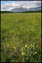 Meadow with tussocks and wildflowers. Wrangell-St Elias National Park ( color)