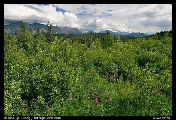 Tundra in summer and Nutzotin Mountains. Wrangell-St Elias National Park (color)