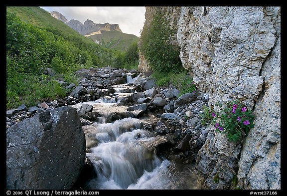 Fireweed, stream and cliff, Skokum Volcano. Wrangell-St Elias National Park, Alaska, USA.