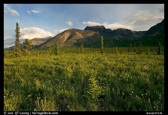 Meadow and Skokum Volcano. Wrangell-St Elias National Park, Alaska, USA.