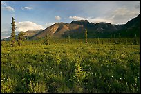 Meadow and Skokum Volcano. Wrangell-St Elias National Park, Alaska, USA. (color)