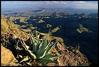 Agaves on South Rim, evening. Big Bend National Park, Texas, USA. (color)