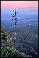 Agave stilt on South Rim, sunset. Big Bend National Park, Texas, USA. (color)