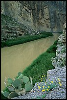 Flowers, cactus, and Rio Grande in Santa Elena Canyon. Big Bend National Park, Texas, USA.