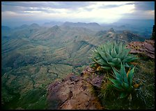 Agave plants overlooking desert mountains from South Rim. Big Bend National Park ( color)