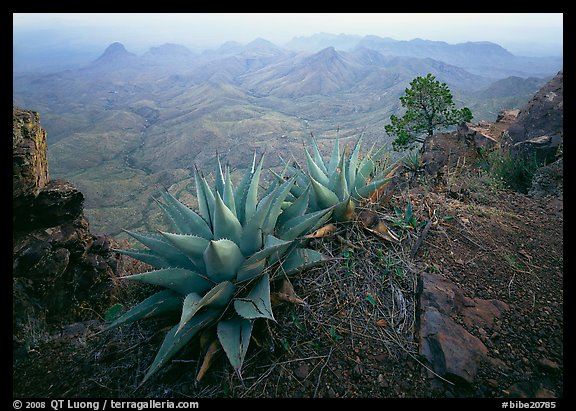 Agaves on South Rim overlooking desert mountains. Big Bend National Park (color)