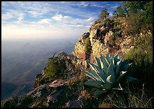 Agave and cliff, South Rim, morning. Big Bend National Park, Texas, USA.