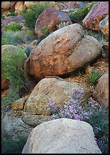 Boulders and wildflowers. Big Bend National Park ( color)