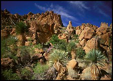 Yuccas and boulders in Grapevine mountains. Big Bend National Park, Texas, USA. (color)