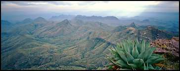 Century plant and desert mountains from South Rim. Big Bend National Park (Panoramic color)